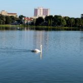 Lake Clean Up!