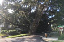Tree at Success & Lake Morton to be Removed